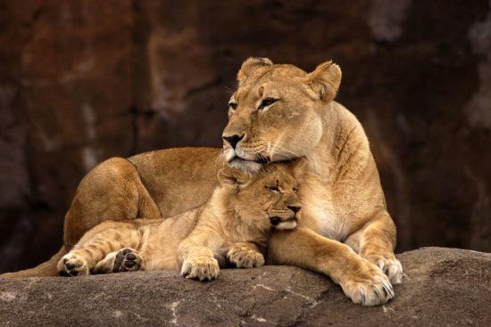 zoos-tierparks-ausflugsziel-salzburger-land-2